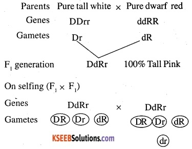 2nd PUC Biology Question Bank Chapter 5 Principles of Inheritance and Variation 15