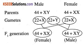 2nd PUC Biology Question Bank Chapter 5 Principles of Inheritance and Variation 7