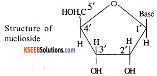 2nd PUC Chemistry Question Bank Chapter 14 Biomolecules - 11