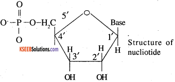 2nd PUC Chemistry Question Bank Chapter 14 Biomolecules - 12