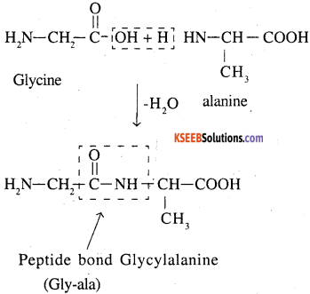 2nd PUC Chemistry Question Bank Chapter 14 Biomolecules - 5