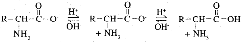 2nd PUC Chemistry Question Bank Chapter 14 Biomolecules - 9