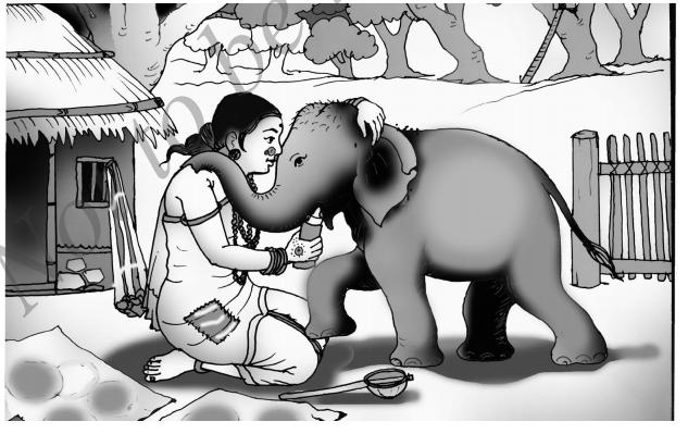 Jenu Kurubara Tayiyu Kadu Aneya Maganu Summary in Kannada 4