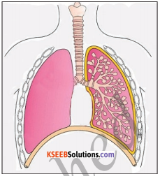 KSEEB Solutions for Class 5 EVS Chapter 1 Living World 5