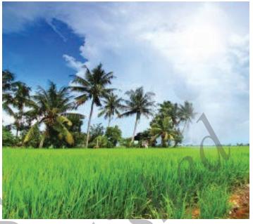 Mangala Grahadalli Putti Summary in Kannada 10