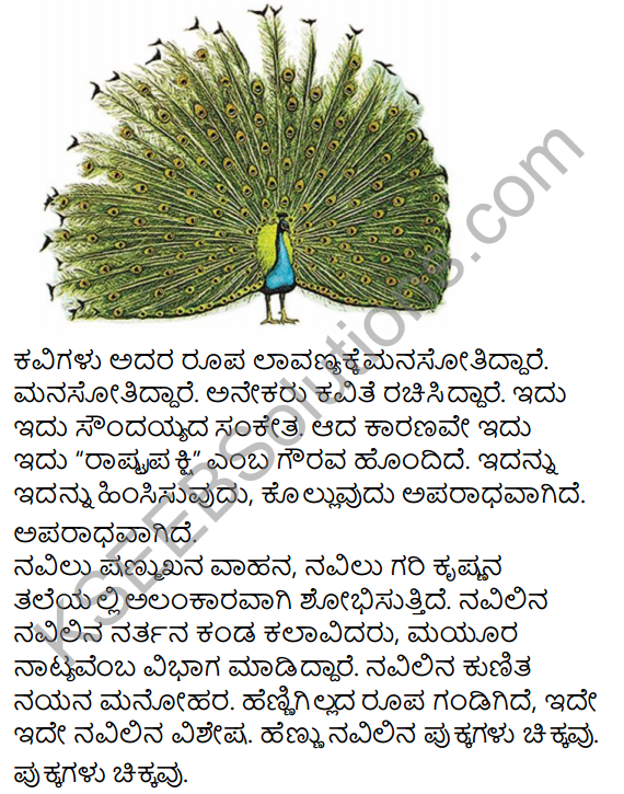 Navilu Summary in Kannada 13