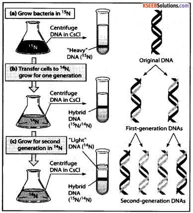 2nd PUC Biology Model Question Paper 3 with Answers 8