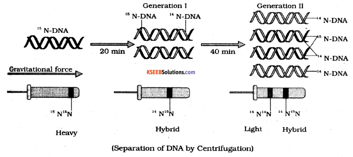 2nd PUC Biology Previous Year Question Paper March 2019 5