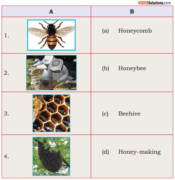 KSEEB Solutions for Class 6 English Prose Chapter 3 How do Bees Make Honey 1