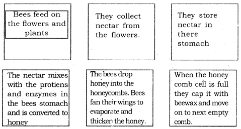 KSEEB Solutions for Class 6 English Prose Chapter 3 How do Bees Make Honey 3