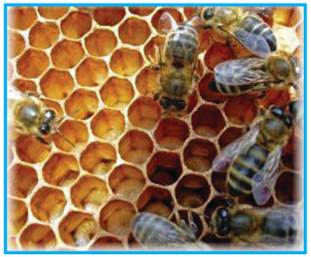 KSEEB Solutions for Class 6 English Prose Chapter 3 How do Bees Make Honey 9