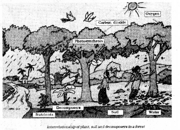 KSEEB Solutions for Class 7 Science Chapter 17 Forests Our Lifeline 57