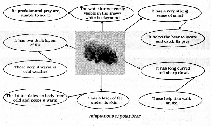KSEEB Solutions for Class 7 Science Chapter 7 Weather, Climate and Adaptations of Animals to Climate 1